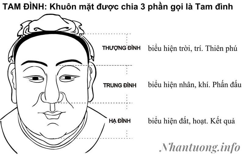 Khuôn mặt được chia thành 3 phần gọi là tam đình