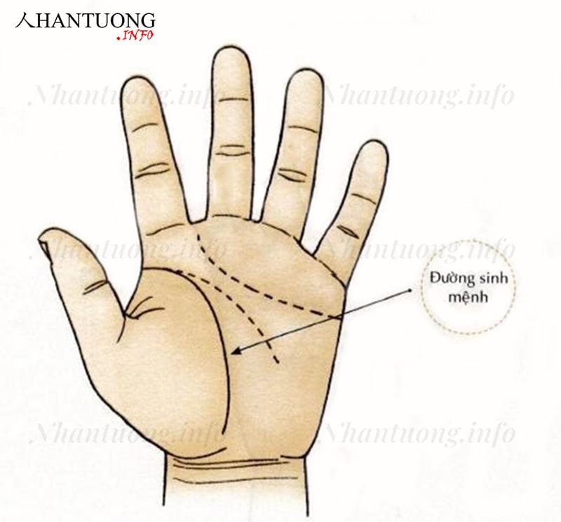 Đường sinh mệnh trên bàn tay