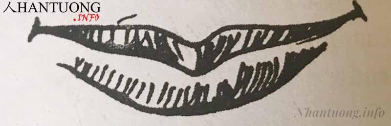 Hình dáng tướng miệng hình cánh cung