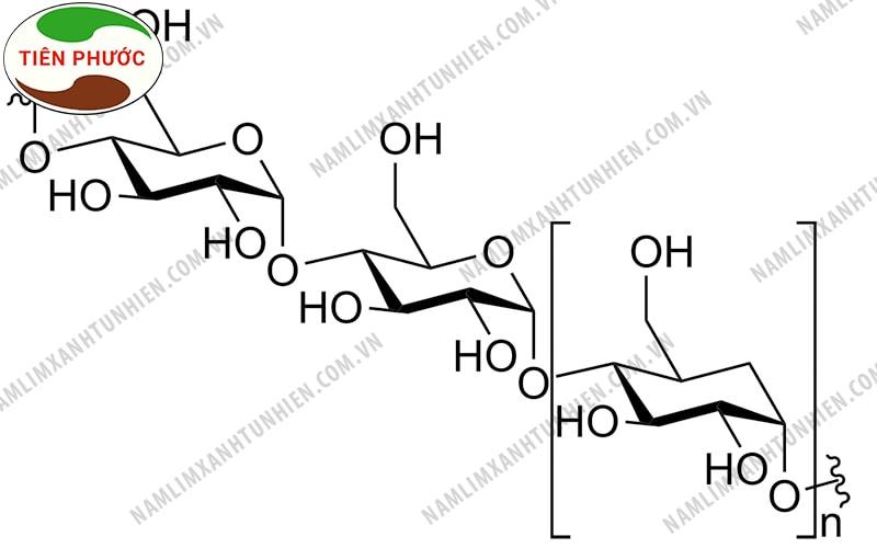 Cấu trúc hóa học của Polysaccharides