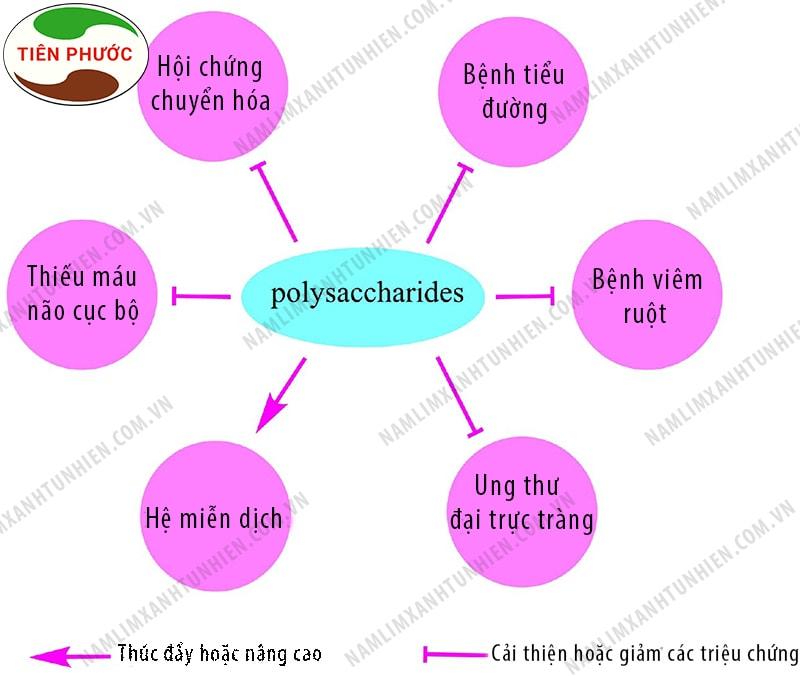Tác dụng của chất polysaccharides đối với sức khỏe con người